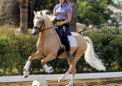 Golden State Canter web1
