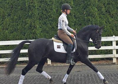 Sheeza trot under saddle1 400
