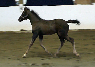 Cassiopeia Trot3