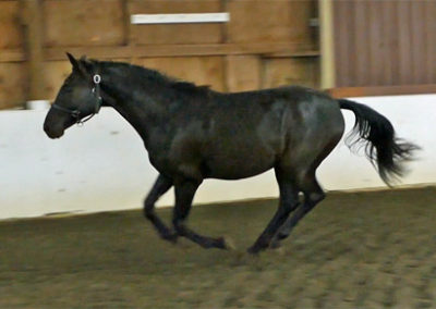 Legacy Canter1 450
