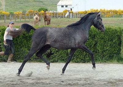 Serena Trot3 450