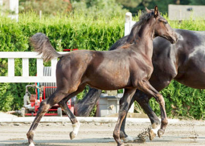 Donatella Trot 1 450