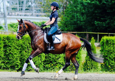 Quinevere Canter 400
