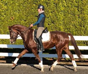 Wradiant trot under saddle 300