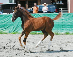 Wrendezvous Canter 300