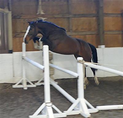 Quinevere Jump 400